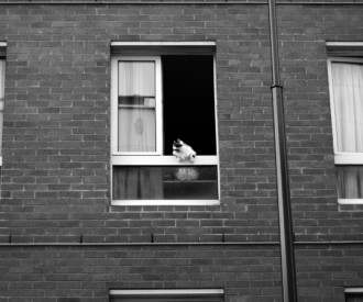 Fenêtres sur cour 17